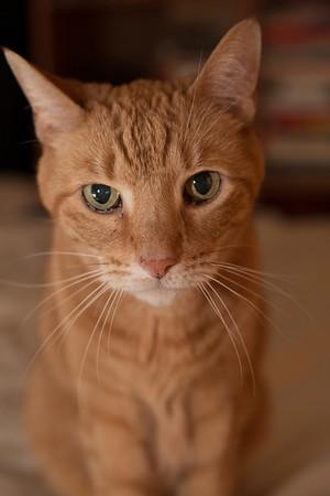 Rusty. RIP February 2015. :(