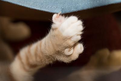 Simon's huge paw