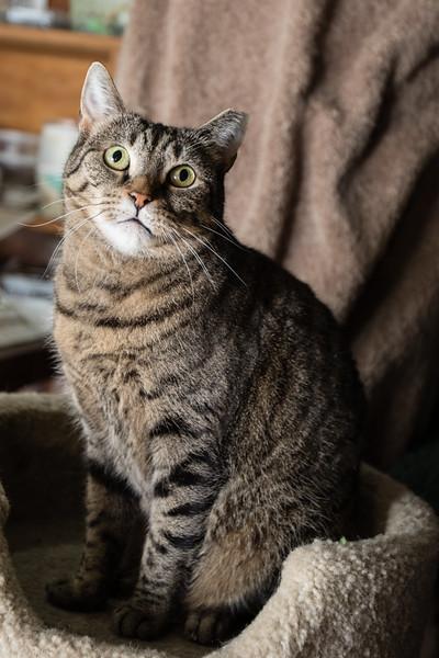 Kitty Loft kitties