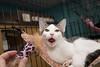 Alyosha just kept yawning