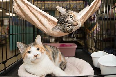 Petunia and Penelope