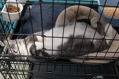 Thumper feeling relaxed