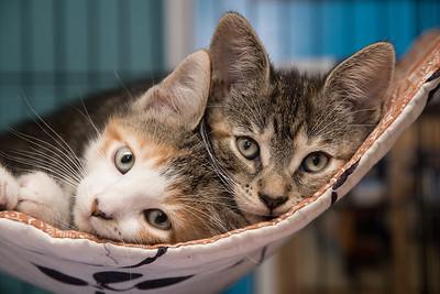 Penelope and Petunia