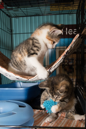 Penelope and Petunia at play