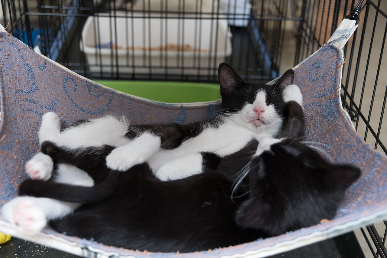 Dexter and Tex, snugglebunnies