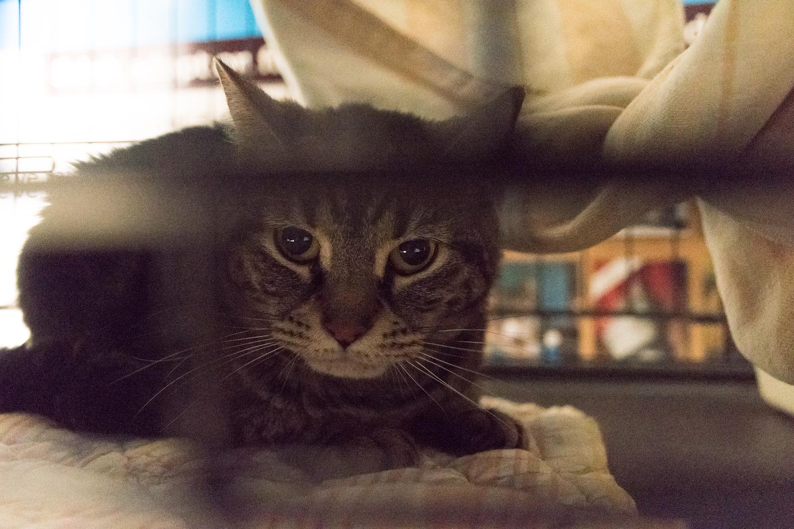 Luna in her cave, so unhappy