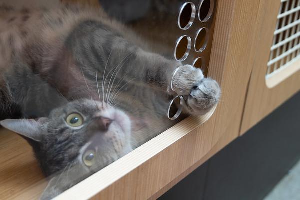 Tania takes advantage of the paw-sized holes