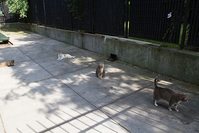 Berry St. cats