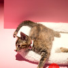 SF SPCA Holiday Windows 2015, Nov 20, 2015 at Macy's West - Union Square