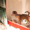 SF SPCA Holiday Windows 2018, Nov 16, 2018 at Macy's Union Square