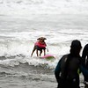 World Dog Surfing Championships 2018, Aug 4, 2018 in Pacifica