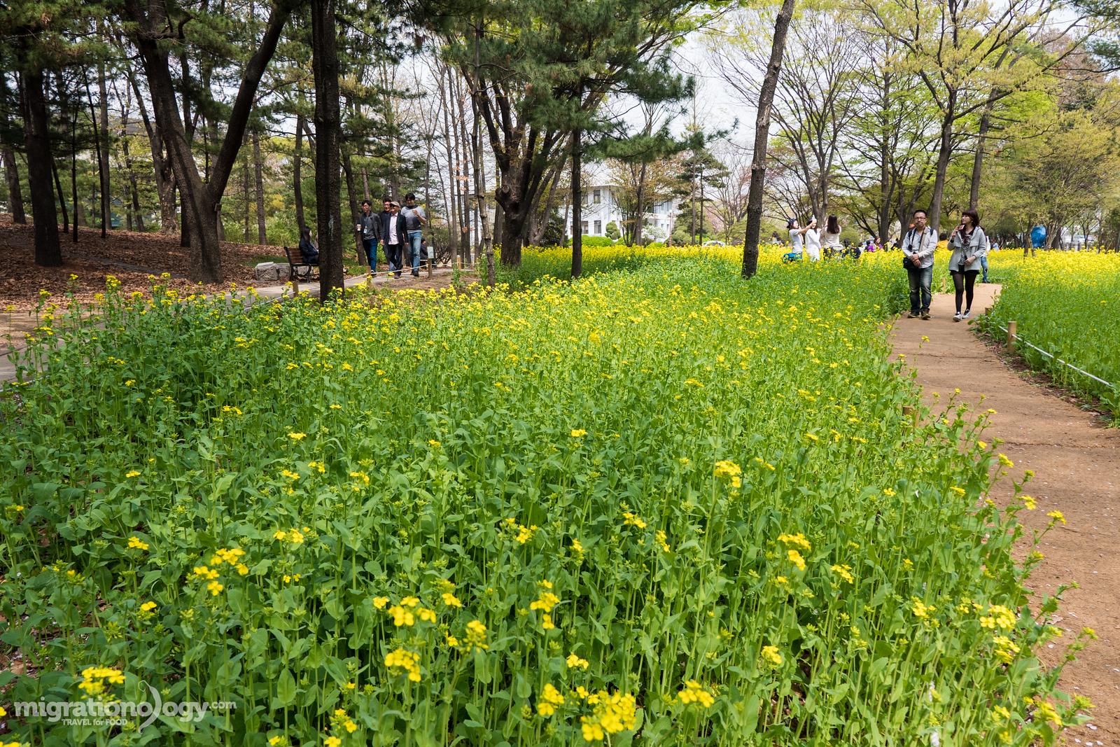 Seoul parks