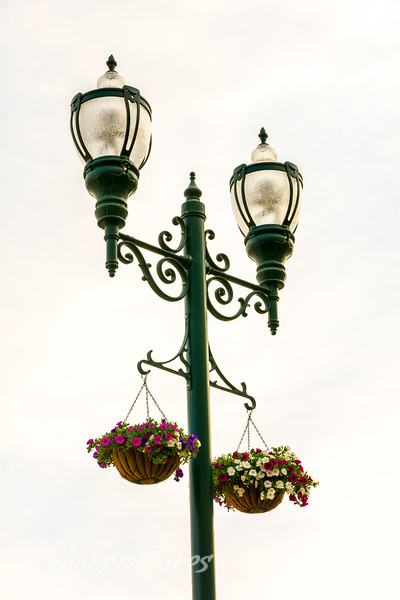 Street lights with plants
