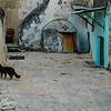 Alley cat in Old Jerusalem alley