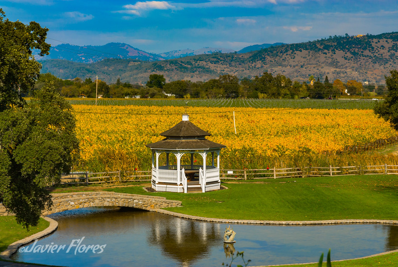 Gazebo In the Vineyards