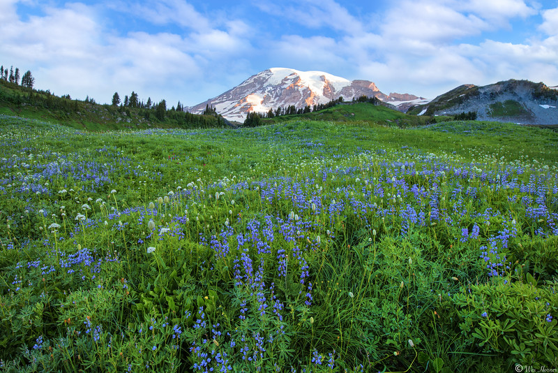Mount Ranier National Park, WA