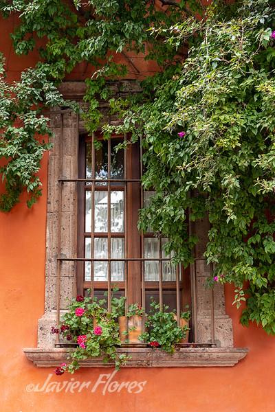 San Miguel De Allende Window with Flowers