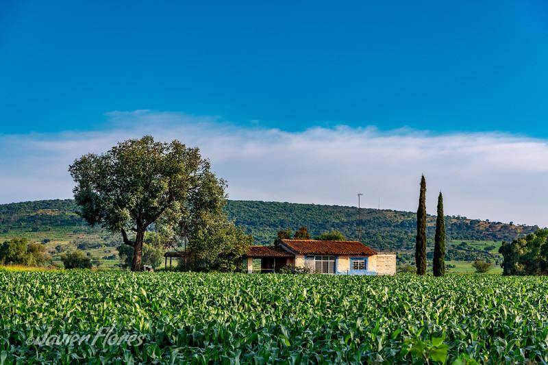 Farmhouse and Cornfields
