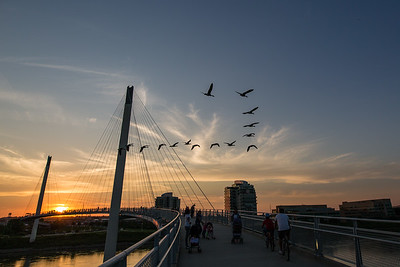 Birds and Bridges