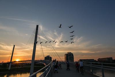 Birds and Bridges