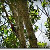 2014-07-23_IMG_2741_Boyd Hill Preseve,St Pete,Fl_