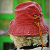 2014-07-23_IMG_0701_Boyd Hill Preseve,St Pete,Fl_