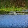 2014-07-23_IMG_2728_Boyd Hill Preseve,St Pete,Fl_