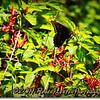2014-07-23_IMG_2733_Boyd Hill Preseve,St Pete,Fl_