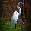 2014-10-15_IMG_6605_ Pinellas Park,Fl