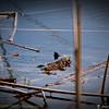 2014-10-15_IMG_6529_ Pinellas Park,Fl