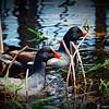 2014-10-15_IMG_6515_ Pinellas Park,Fl