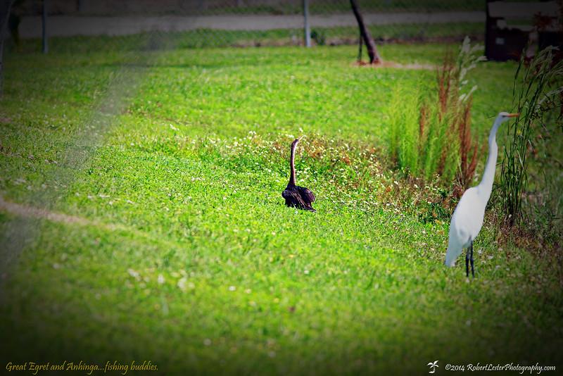 2014-10-15_IMG_6598_ Pinellas Park,Fl