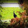 2014-10-15_IMG_6603_ Pinellas Park,Fl