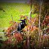 2014-10-15_IMG_6579_ Pinellas Park,Fl