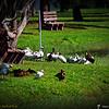 2014-10-15_IMG_6649_ Pinellas Park,Fl