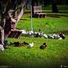 2014-10-15_IMG_6648_ Pinellas Park,Fl