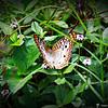 2014-10-15_IMG_6636_ Pinellas Park,Fl