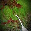 2014-10-15_IMG_6610_ Pinellas Park,Fl