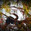 2014-10-15_IMG_6464_ Pinellas Park,Fl