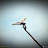 2014-10-15_IMG_6638_ Pinellas Park,Fl