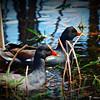 2014-10-15_IMG_6516_ Pinellas Park,Fl