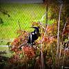 2014-10-15_IMG_6581_ Pinellas Park,Fl
