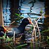2014-10-15_IMG_6511_ Pinellas Park,Fl