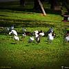 2014-10-15_IMG_6650_ Pinellas Park,Fl