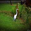 2014-10-15_IMG_6591_ Pinellas Park,Fl