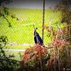 2014-10-15_IMG_6583_ Pinellas Park,Fl