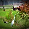 2014-10-15_IMG_6596_ Pinellas Park,Fl