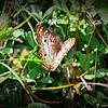 2014-10-15_IMG_6632_ Pinellas Park,Fl