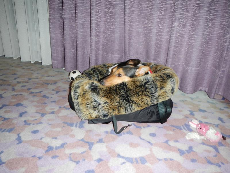 Jefke in zijn mandje vlak aan de verwarming.