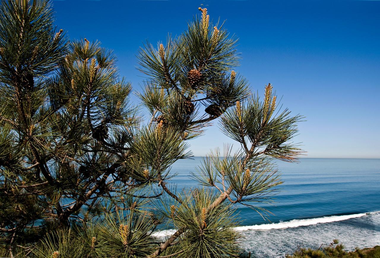 150 Torrey Pine and beach